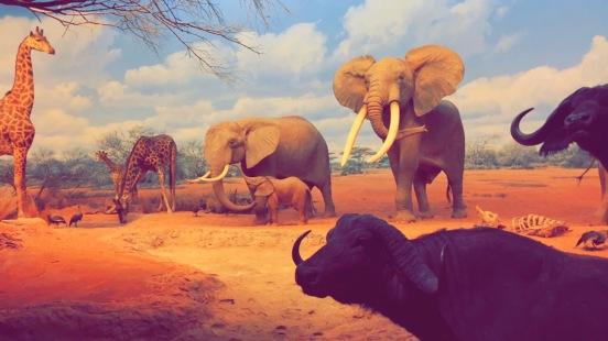 African Mammals, Natural History Museum Los Angeles, First Fridays, Chantal Boyajian.JPG