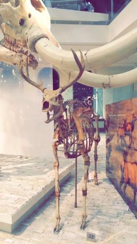 Los Angeles, Natural History Museum, Chantal Boyajian