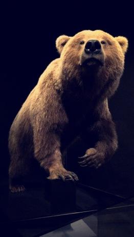 Natural History Museum, Los Angeles, Grizzly Bear, Chantal Boyajian