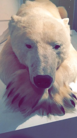 Natural History Museum Los Angeles, Polar Bear, Chantal Boyajian, First Fridays