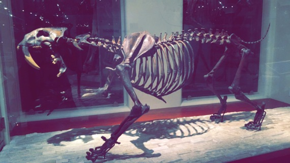 Saber-Toothed Cat, Los Angeles Natural History Museum, Chantal Boyajian